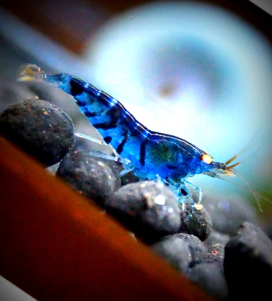 bersicht led beleuchtung f r nano aquarien garnelengarten bayern. Black Bedroom Furniture Sets. Home Design Ideas