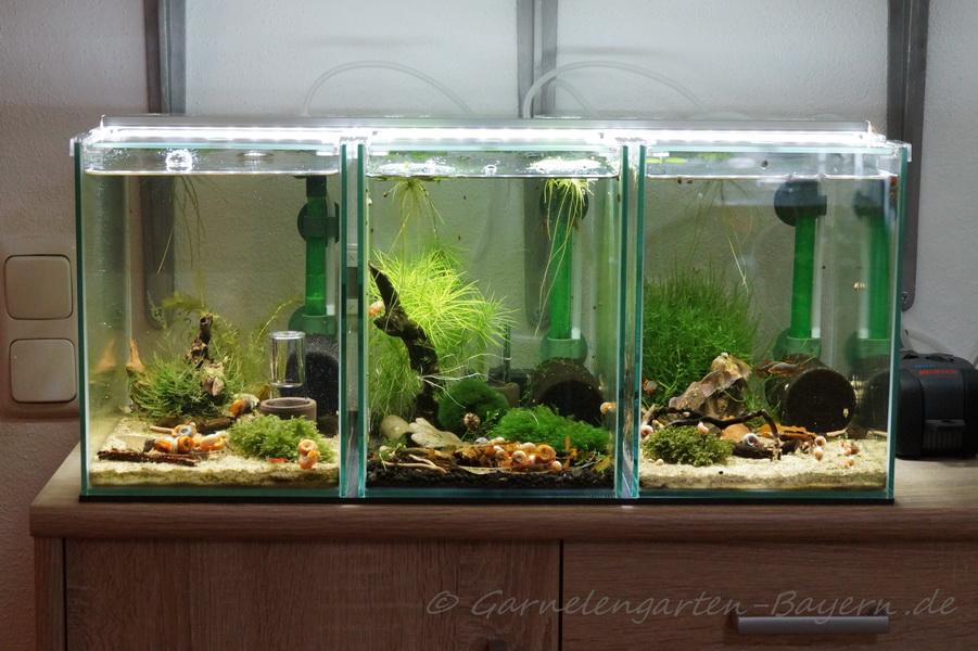 20 Liter Tetra AquaArt LED Becken - blaue Tiger - Taiwaner ...